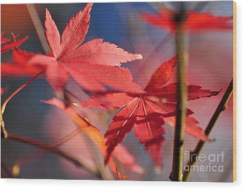 Autumn Maple Wood Print by Kaye Menner