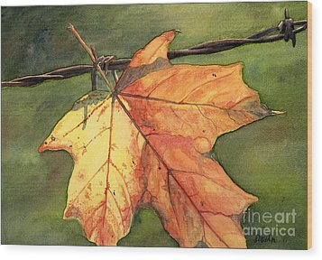 Autumn Maple Leaf Wood Print by Antony Galbraith