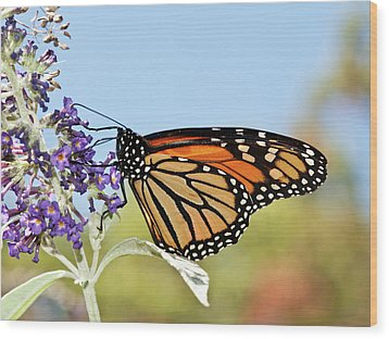 Wood Print featuring the photograph Autumn Monarch Butterfly 2016 by Lara Ellis