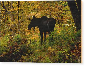 Autumn Moose Wood Print by Brent L Ander
