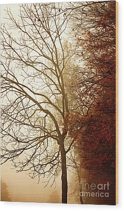 Wood Print featuring the photograph Autumn Morning by Stephanie Frey