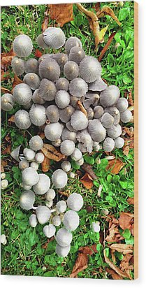 Autumn Mushrooms Wood Print by Nareeta Martin