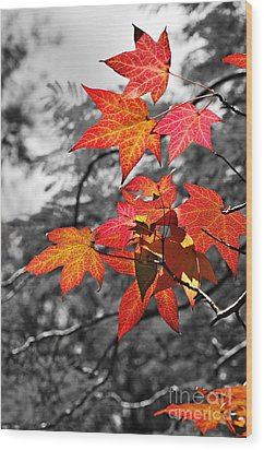 Autumn On Black And White Wood Print by Kaye Menner
