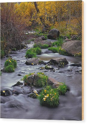 Autumn On Mill Creek Wood Print