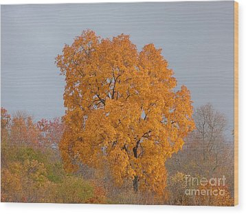 Autumn Over Prettyboy Wood Print