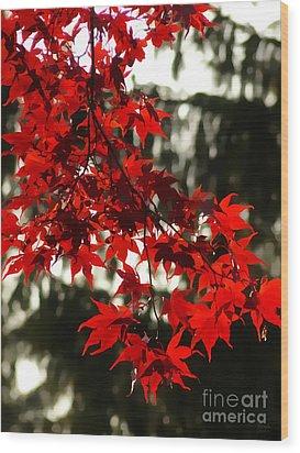 Autumn Red Wood Print by Jeff Breiman