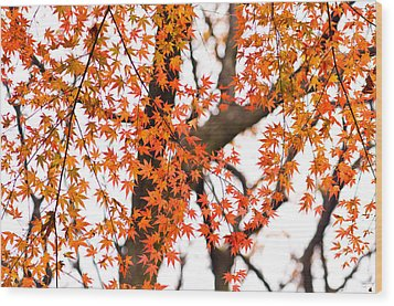 Autumn Red Leaves On A Tree   Wood Print by Ulrich Schade