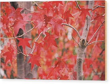 Autumn Reds Wood Print