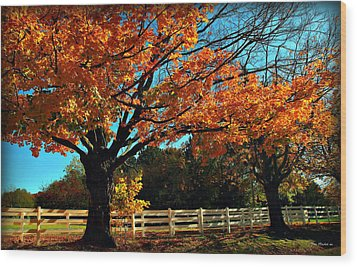 Wood Print featuring the photograph Autumn Rows by Joan  Minchak