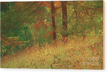 Autumn Scene In The Forest Wood Print by Yali Shi