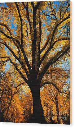 Autumn Season 4 Wood Print by Terry Elniski