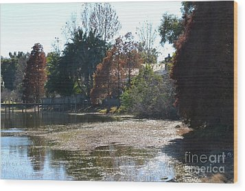 Wood Print featuring the photograph Autumn Serenity by Carol  Bradley