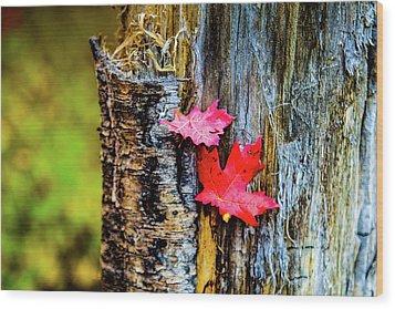 Autumn Silence Wood Print