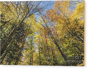 Wood Print featuring the photograph Autumn Skies by Anthony Baatz