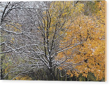 Wood Print featuring the photograph Autumn Snow by Doris Potter