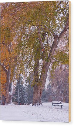 Autumn Snow Park Bench   Wood Print by James BO  Insogna