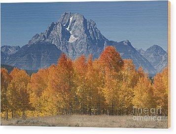 Autumn Splendor In Grand Teton Wood Print by Sandra Bronstein