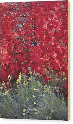 Autumn Splendor In Zion National Park Wood Print by Bruce Gourley