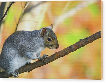 Wood Print featuring the photograph Autumn Squirrel by Karol Livote