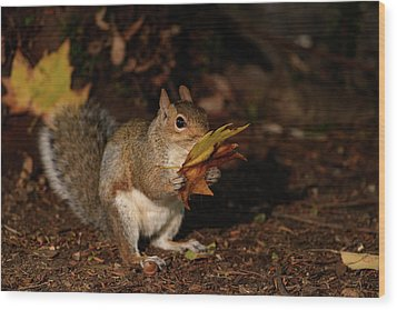 Autumn Squirrel Wood Print
