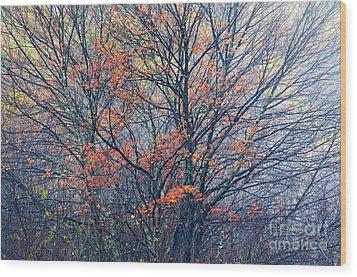 Autumn Sugar Maple In Fog Wood Print by Thomas R Fletcher