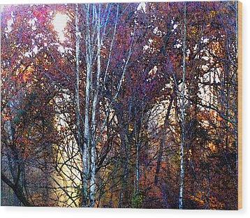 Autumn Sunlight Wood Print by Jane Schnetlage