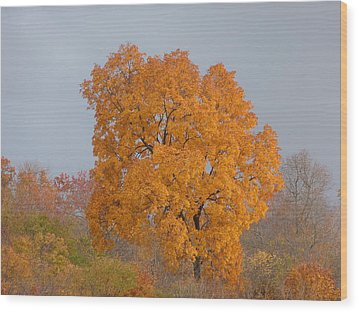 Wood Print featuring the photograph Autumn Tree by Donald C Morgan
