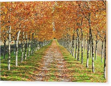 Autumn Tree Wood Print by Julien Fourniol/Baloulumix