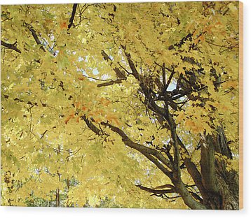 Wood Print featuring the photograph Autumn Tree by Raymond Earley