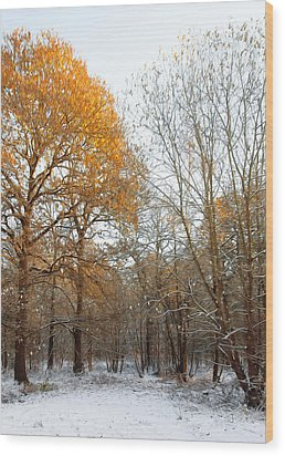 Autumn Tree Wood Print by Svetlana Sewell