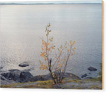 Wood Print featuring the photograph Autumn View 3 by Sami Tiainen