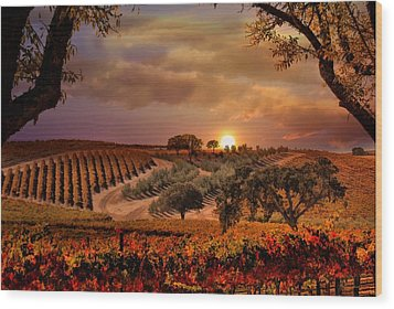 Autumn Vineyard Wood Print by Stephanie Laird
