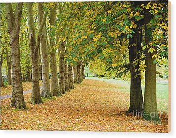 Autumn Walk Wood Print by Colin Rayner