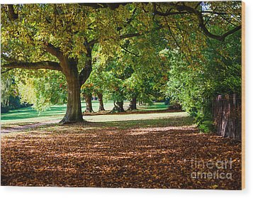 Autumn Walk In The Park Wood Print by Colin Rayner