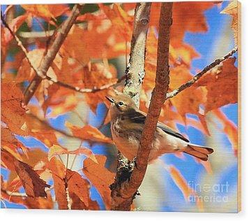Autumn Warbler Wood Print by Debbie Stahre