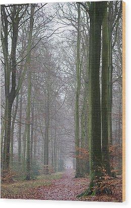 Autumn Woodland Avenue Wood Print by Gary Eason
