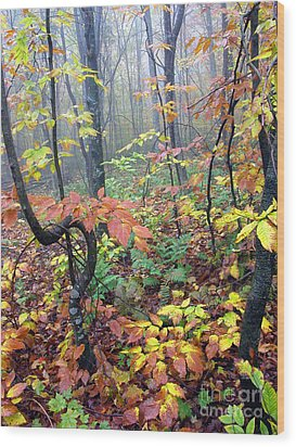 Autumn Woodland Wood Print by Thomas R Fletcher