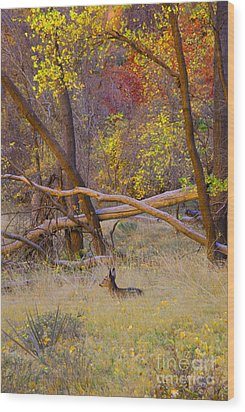 Autumn Yearling Wood Print by Dennis Hammer