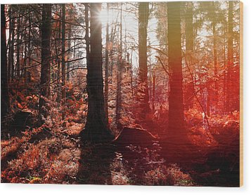 Autumnal Afternoon Wood Print