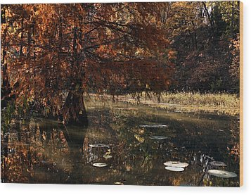 Wood Print featuring the photograph Autumnal Solace At Lake Murray by Tamyra Ayles