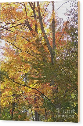 Wood Print featuring the photograph Autumn's Gold - Photograph by Jackie Mueller-Jones