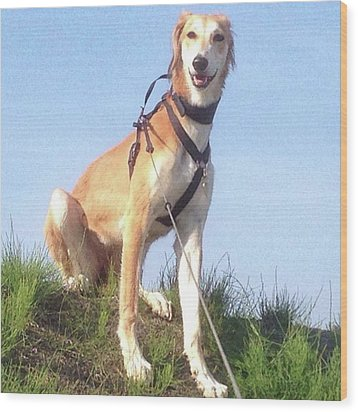 Ava-grace, Princess Of Arabia  #saluki Wood Print by John Edwards