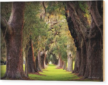 Avenue Of Oaks Sea Island Golf Club St Simons Island Georgia Art Wood Print by Reid Callaway