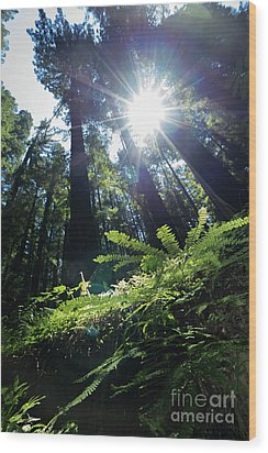 Wood Print featuring the photograph Avenue Of The Giants Redwood Trees California Dsc5517 by Wingsdomain Art and Photography