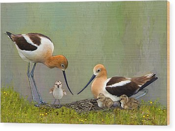 Avocet Family Wood Print