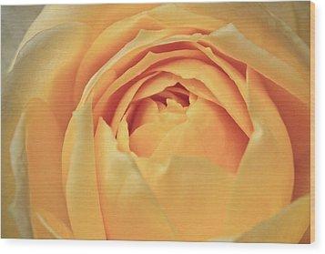Awakening Yellow Bare Root Rose Wood Print by Ryan Kelly