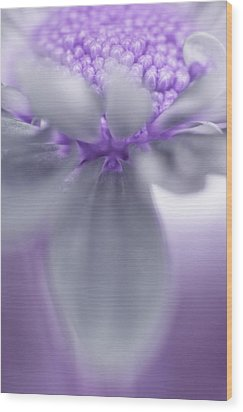 Awashed In Lavender Wood Print by John De Bord