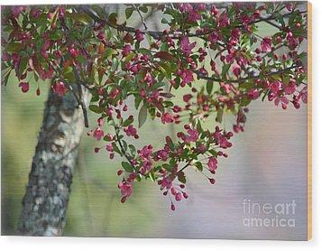 Awe... Spring Wood Print by Brenda Bostic