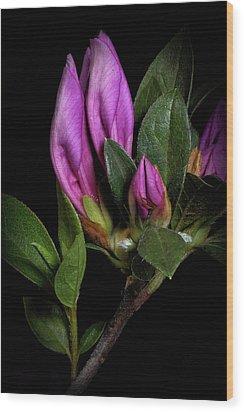 Wood Print featuring the photograph Azalea Buds by Richard Rizzo