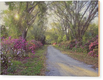 Azalea Lane By H H Photography Of Florida Wood Print by HH Photography of Florida
